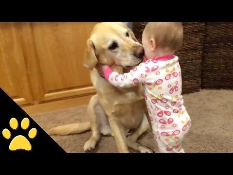 Baby Laughing at Labrador Dog because they are best friends | Dog loves Baby Compilation - YouTube