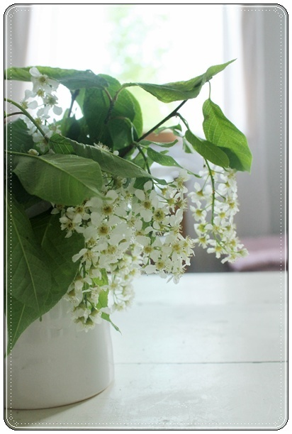 Tuomi - Bird Cherry - Prunus padus