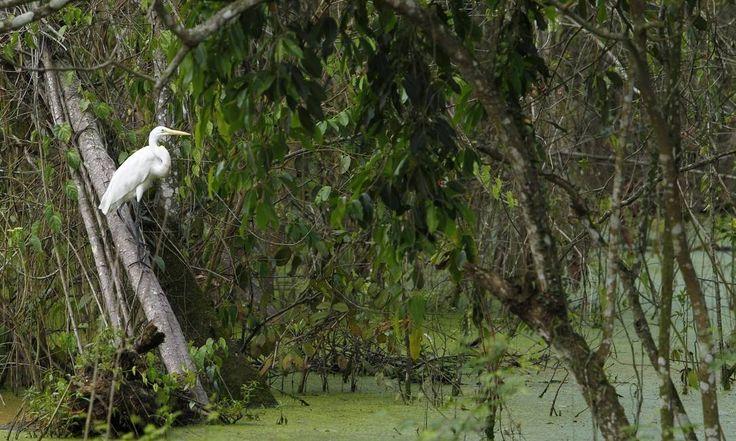 Mudanças climáticas podem fomentar crescimento de florestas tropicais