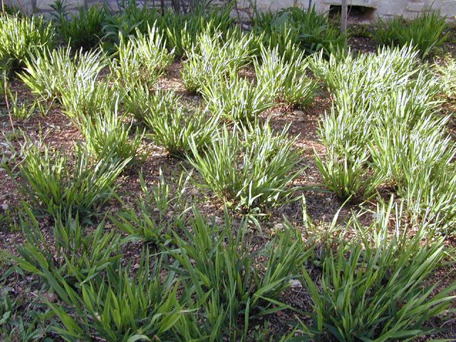 17 Best Images About Nontoxic Shade Tolerant Plants On