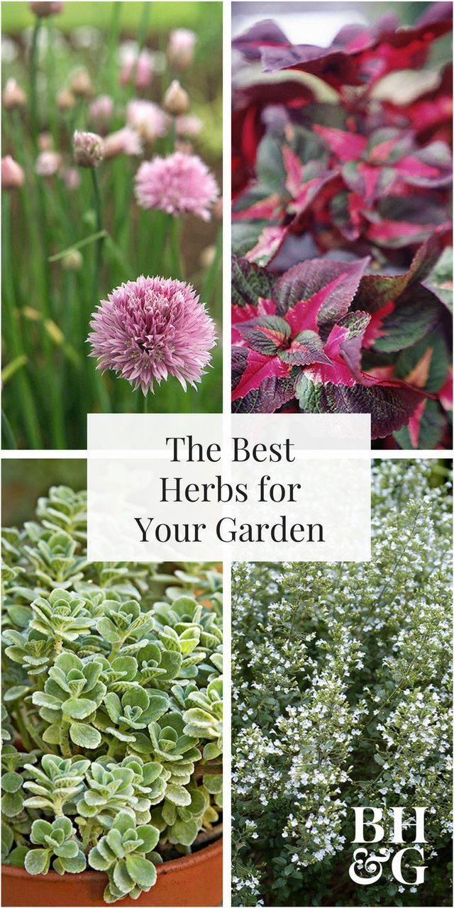 Skip the store-bought variety and add edible plants to your garden by growing herbs. Find the best herbs for your indoor or outdoor garden and successfully grow them with our helpful guide.