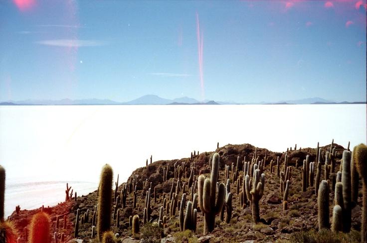 Salar de Uyuni Isla Pescadores B