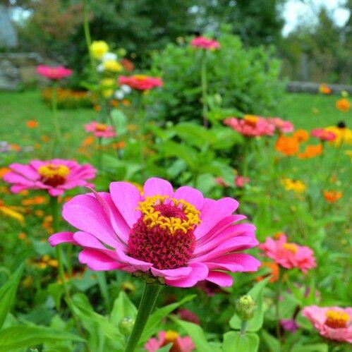 Summer flowers,  pink flower closeup