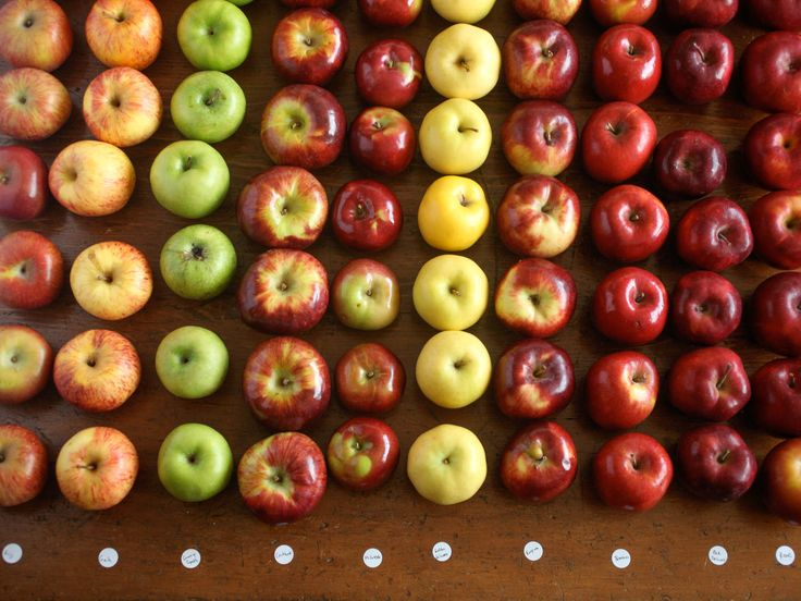 The Food Lab's Apple Pie, Part 1: What Are the Best Apples for Pie? | Serious Eats