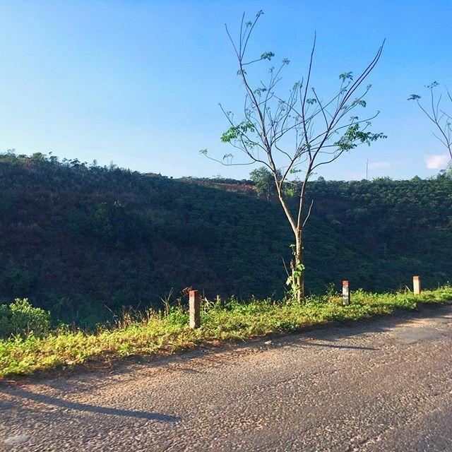 New life on the road #tree #road #calm . . . #dalat #dalatvietnam #vietnamtravel #vietnam #explorevietnam  #amazingvietnam #vietnamcharm #ilovevietnam #travelvietnam #southeastasia #beautifulseasia #discover #wanderlust #worldphoto #travel #backpacking #globetrotter #quebecoisenvoyage #visionofpictures #eatheacope #snapseed #shotoniphone #iphonepics #iphonephotography #phonetography