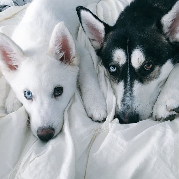 Wolf and Storm so cute together