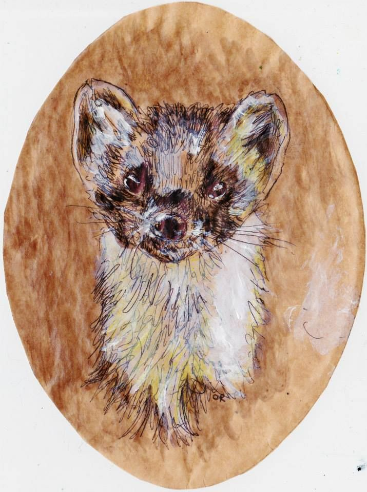 Polecat in acrylic and ink by David Reid