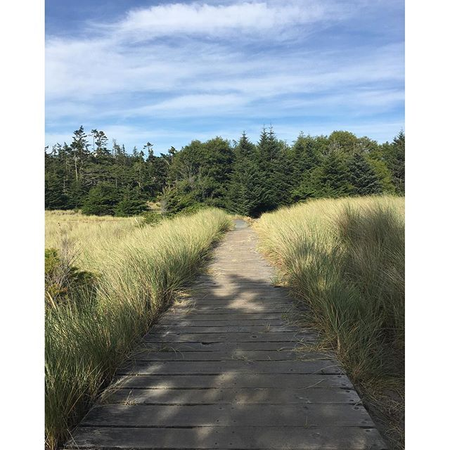【rosejamlushie】さんのInstagramをピンしています。 《#hiking #trail #deceptionpass #statepark #deceptionpassstatepark #deceptionpassbridge #logs #camping #summer #trees #woods #bluesky #pnw #sky #sun #clouds  #ディセプションパス州立公園 #ハイキング #橋 #キャンプ #夏 #2016 #ワシントン州 #青空 #森林浴 #森林 #雲 #空 #太陽 #太平洋岸北西部》