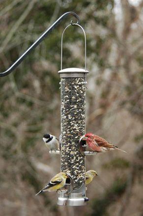"""392A  Aspect Seed Medium Nickel  bird feeder  14""""  tall, excluding hanger - 1 1/4 quart capacity 2 3/4"""" diameter"""