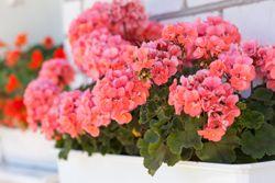Überwintern von Kübelpflanzen – Tipps und Hinweise
