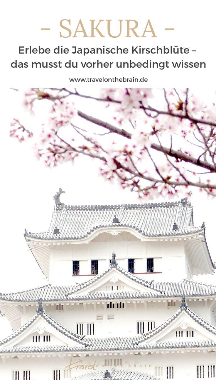 Erlebe die Japanische Kirschblüte – das musst du vorher unbedingt wissen