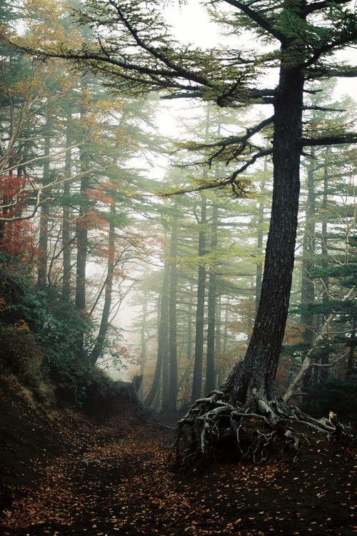 The Aokigahara forest, Japan aka The Suicide Forest. I'd like to go to feel the chilling, eerie feeling...