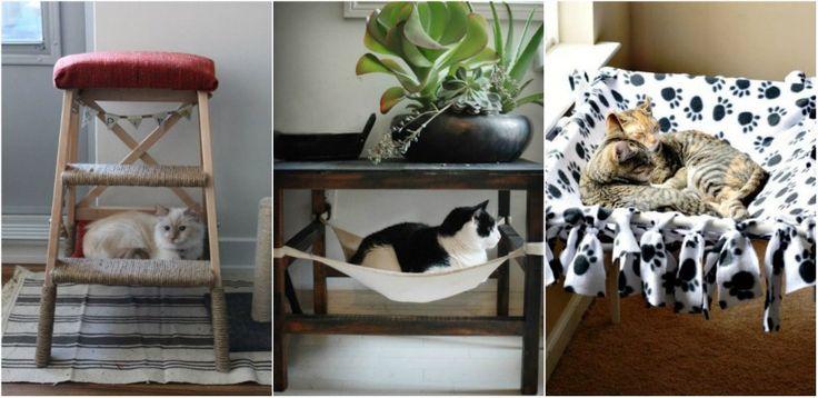 Sfaturi pentru a crea o casa prietenoasa pentru pisici, cu bani putini - http://ideipentrucasa.ro/sfaturi-pentru-crea-o-casa-prietenoasa-pentru-pisici-cu-bani-putini/