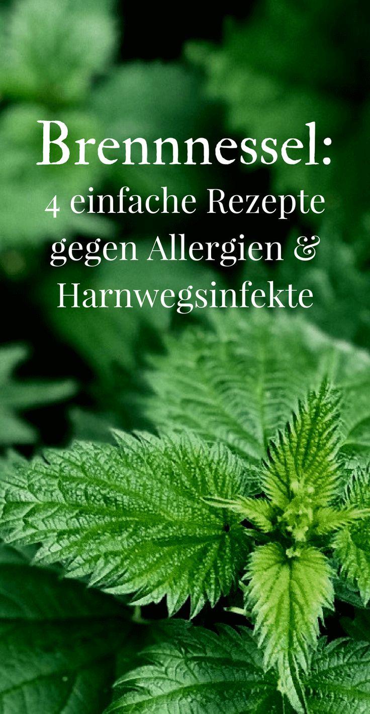 Brennnessel: 5 einfache Rezepte gegen Allergien und Harnwegsinfekte