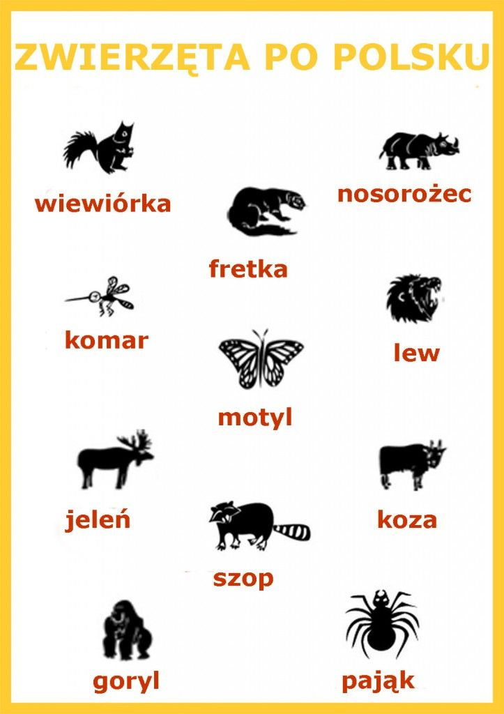 TIME TO LEARN ANIMAL NAMES IN POLISH!!