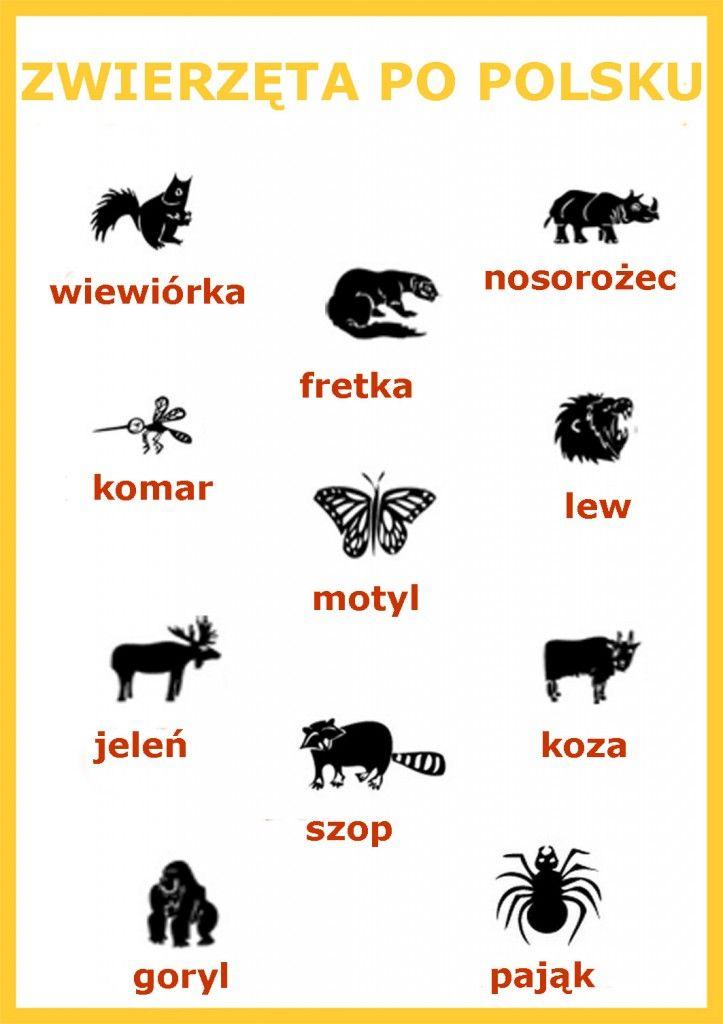 polish animals