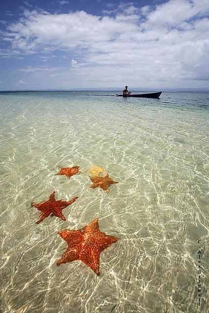 Bocas Del Toro, Panama. Starfish Beach