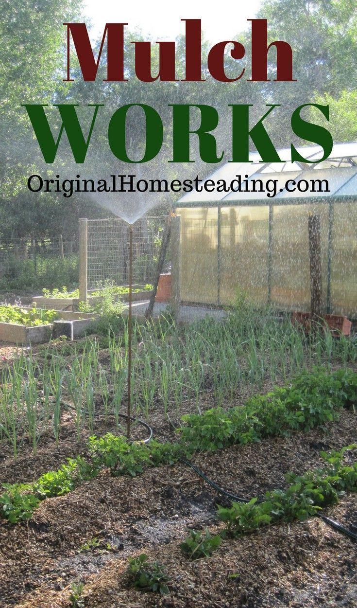 Mulch For Gardening Success Best Garden Mulch Garden Mulch Benefits Of Gardening Mulch