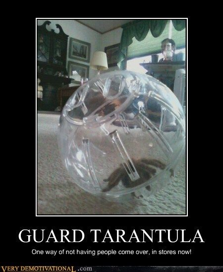 I always wondered if my T's would roll around in a hamster ball