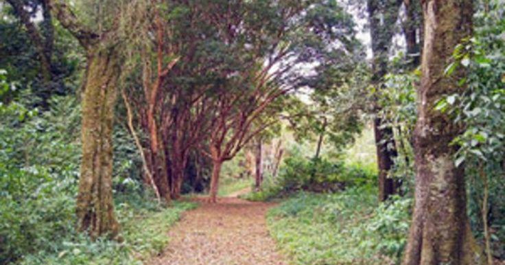 Serra do Japi ganha nova trilha de visita em Jundiaí