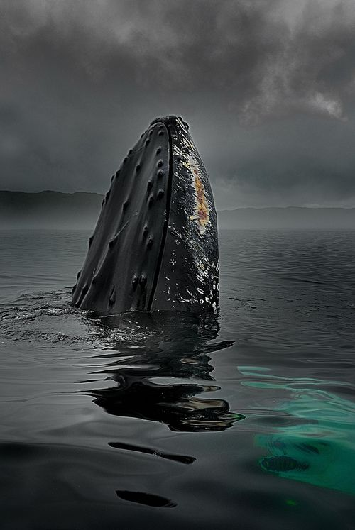 Once I swam with a humpback by accident; that was some awesomely scary shit.