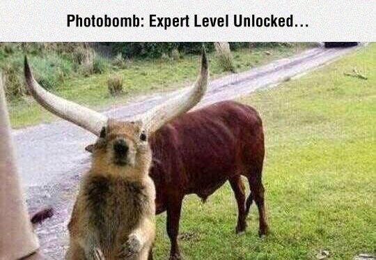 Squirrel Knows How To Photobomb