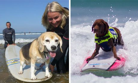 A BEAGLE SURFING?  Emma Kennedy, with Polly, in Devon – and a Californian dog showing how it should be done
