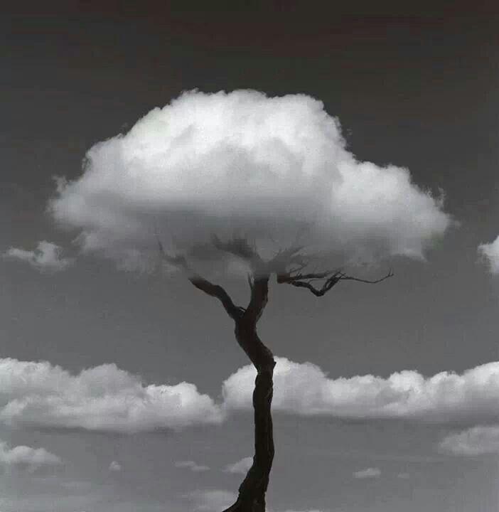 Albero delle nuvole