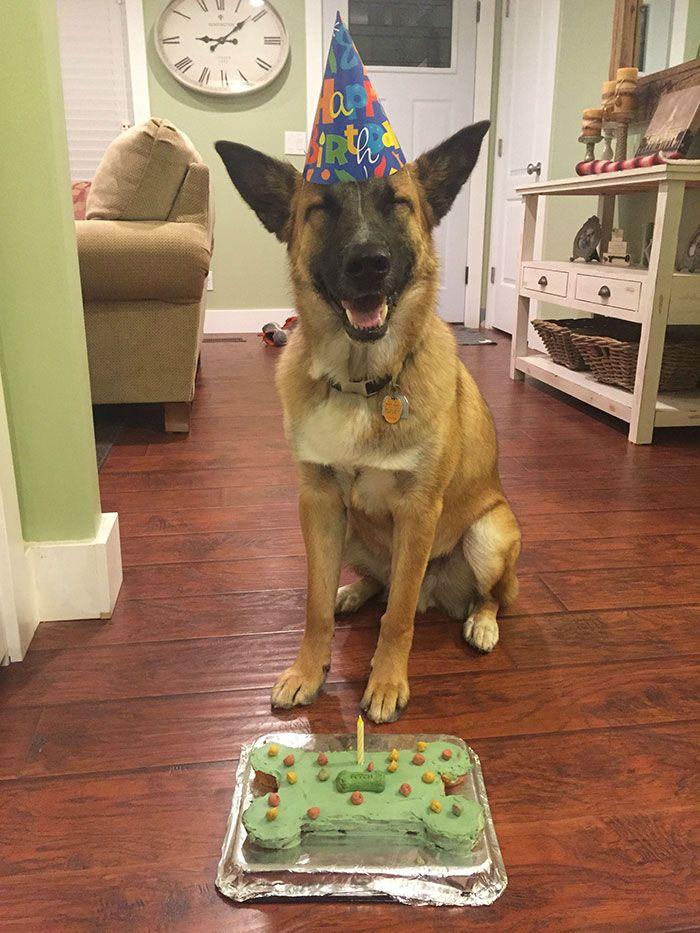 Hayvanlar doğum günü kutluyorlar. Çünkü neden kutlamasınlar? :) Galeri ajanimo.com'da.. #ajanimo #ajanbrian #dog #köpek #hayvan #animal