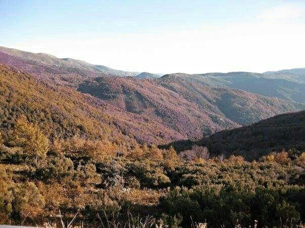 #foliage #Desulo #autunno