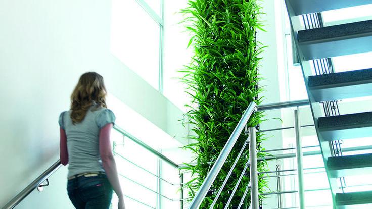 Grünlilie  Die Top Ten der Zimmerpflanzen für saubere Luft