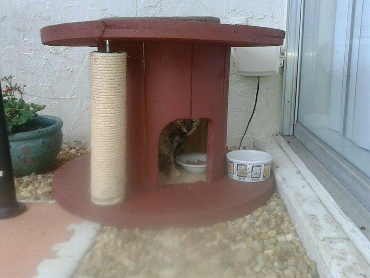 Wood Cat Shelter : Best images about feral cat help on pinterest