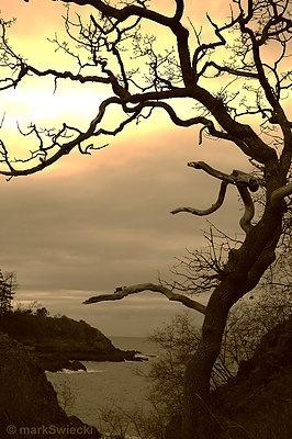 Piper's Lagoon, #Nanaimo, BC, Canada @Susan Caron Caron Elliot - really love this one!