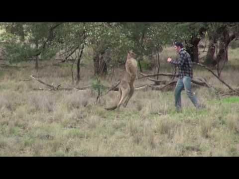 The Kangaroo God