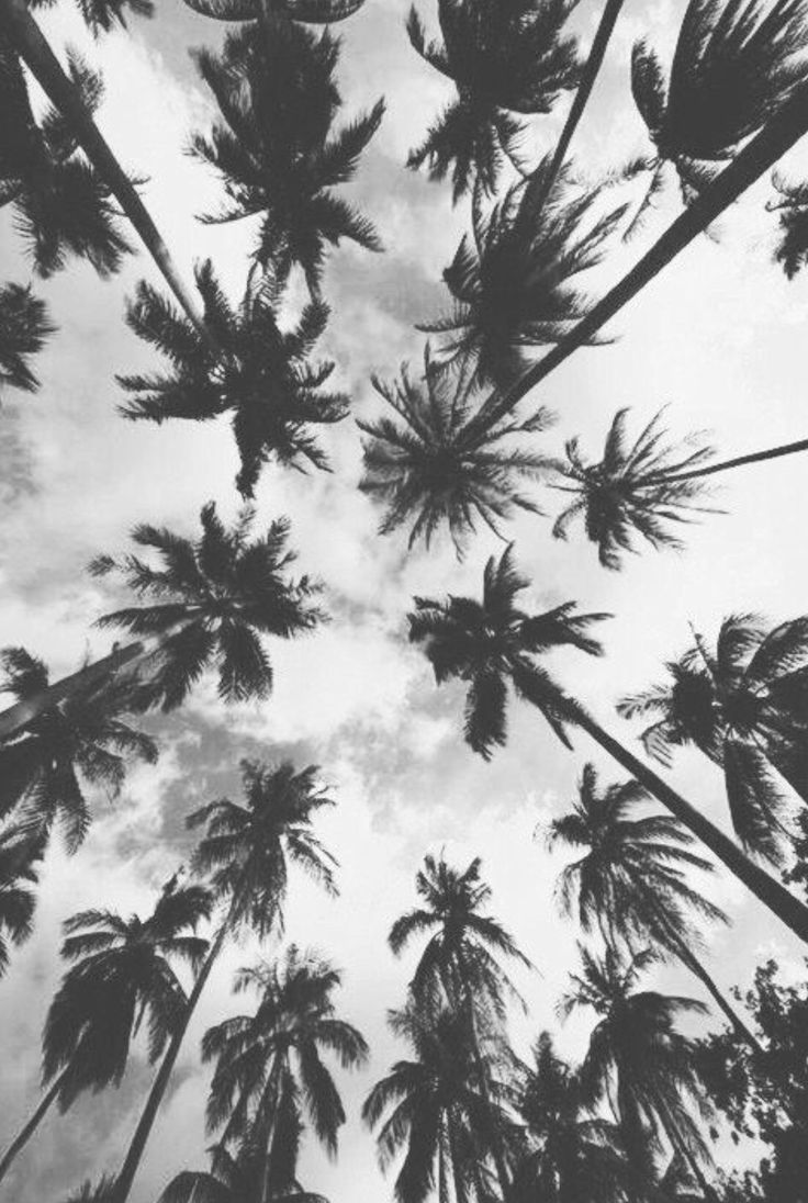 Iphone 6 wallpaper tumblr palm trees - Beautiful Background Tumblr Inspired Art Photographyphone Wallpapersphone Backgroundssummer Backgroundspalm Treespalm