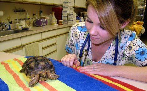 VTNE Study Guide & Practice Test | Veterinary Technician Study Guide | Vet Tech Prep