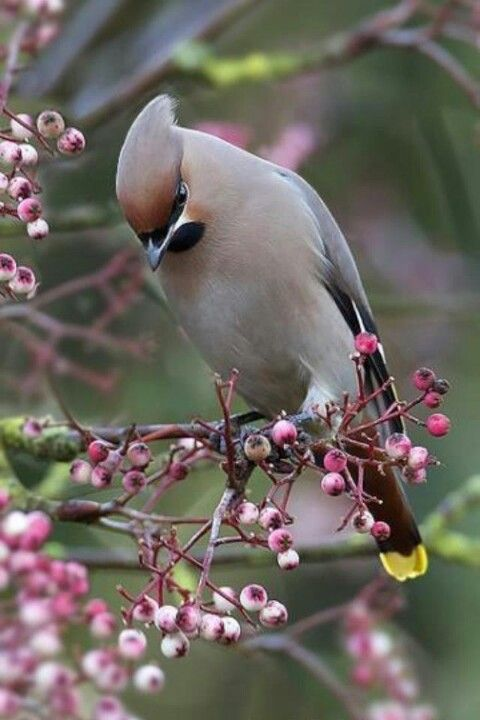 Do not know what bird this is - but I like it.