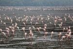 Aves migratorias llegan a la India por temporada de invierno. Visite nuestra página y sea parte de nuestra conversación: http://www.namnewsnetwork.org/v3/spanish/index.php #nnn #bernama #malasia #malaysia #india #aves #migracion #naturaleza #noticias #hechos #india #nuevadelhi #newdelhi