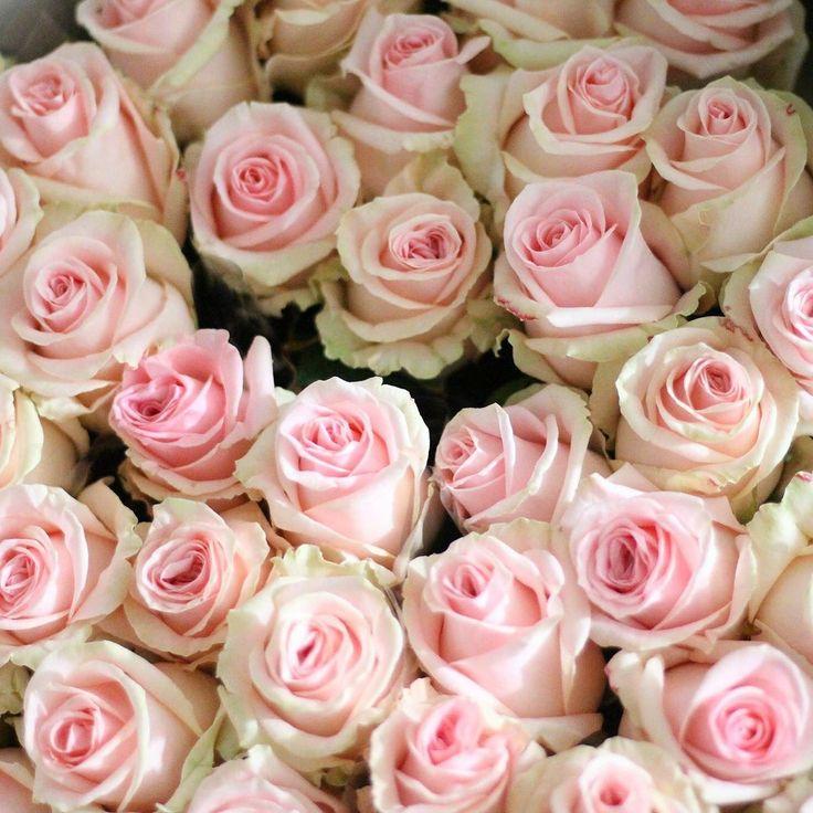 Krásny začiatok týždňa s čerstvými kvietkami prajeme  #love #instagood #cute #follow #photooftheday #beautiful #woman #happy #show #nature #style #nofilter #pretty #flowers #design #awesome #home #handmade #flower #summer #bouqet #floral #naturelovers #picoftheday