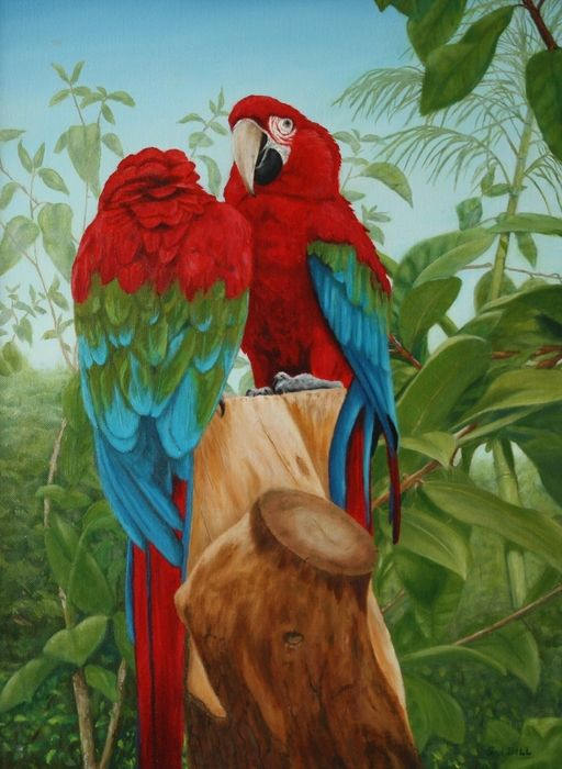 Green Winged Macaws By Sid Ball