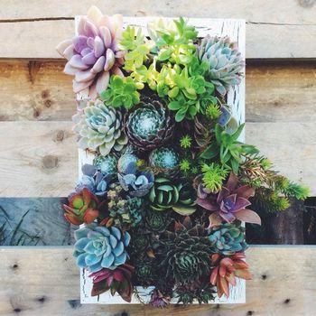 木を使用して壁に飾れば、ナチュラルで素朴な雰囲気。 色や背丈の違う多肉植物が、良いバランスで飾られています。