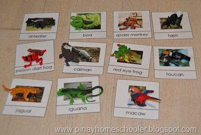 Free rainforest animal control cards (go with Rainforest Toob animals)