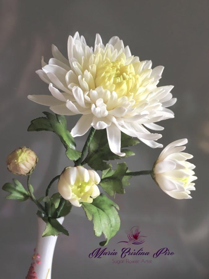 Japanese Chrysanthemum By Piro Maria Cristina Japanese Chrysanthemum Asian Flowers Chrysanthemum Flower