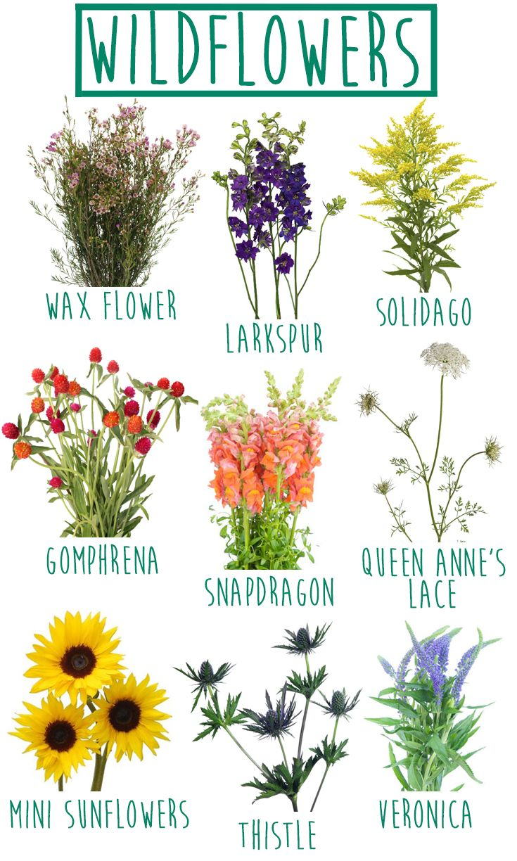 Garden flowers names - The Wildflower Look Is Totally Diy Friendly Carefree And Chic We Have All Compost Tumblerflower Nameswild