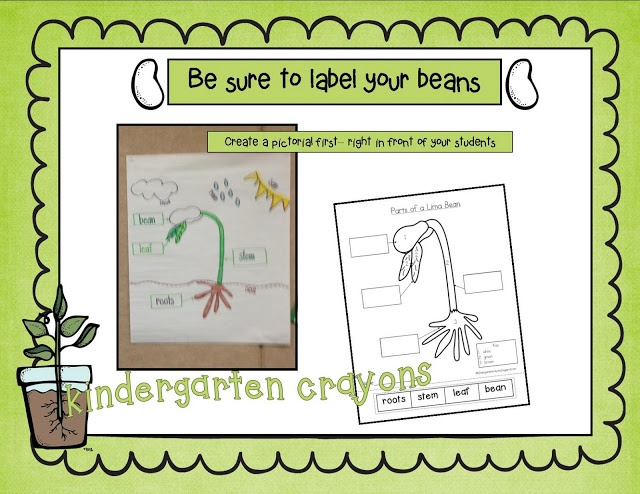 Kindergarten Crayons: Please Label Your Parts... A Lima Bean Pictorial and Cut and Paste Freebie!