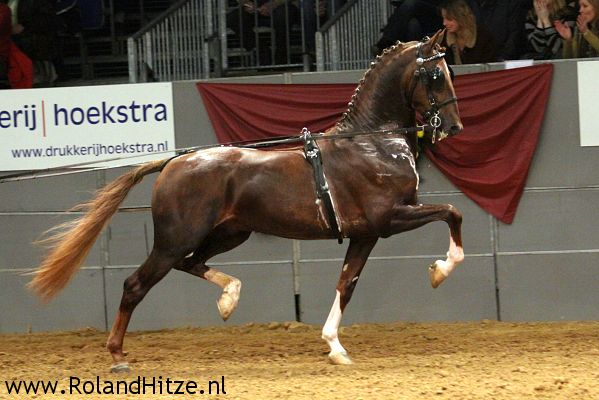dutch harness horses | Takes clients from all major cities within North Carolina