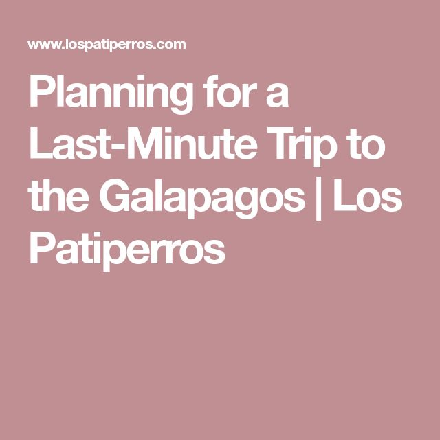 Planning for a Last-Minute Trip to the Galapagos | Los Patiperros