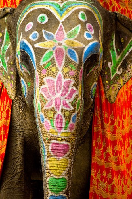 Ride an elephant in India.