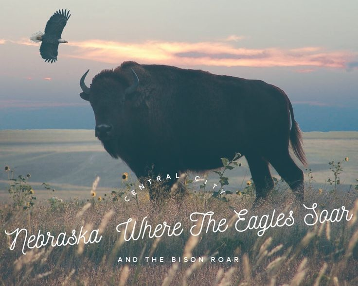 Central City, Nebraska  Where the eagles soar and the bison roar