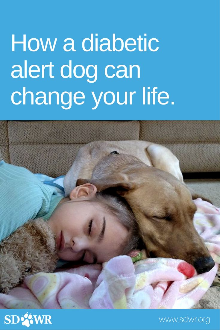 10 ways a diabetic alert dog can change your life.  1. A Sense of security. Those with disabilities tend to feel vulnerable. Living with diabetes can be isolating and scary. Whether you live alone, or you're afraid of your child being away from you, a Diabetic Alert Dog provides essential alerts and security.  To learn more, visit our blog.